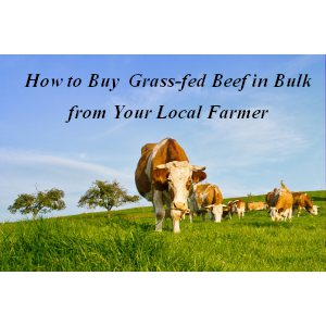 how to buy beef in bulk