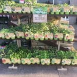 Lowe's organic vegetable and herb plants