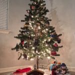 non-toxic Christmas tree